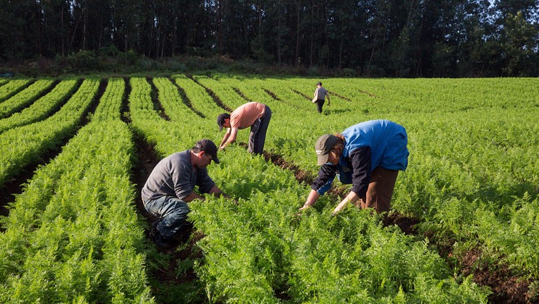 Agricultura Familiar Mda Divulgacao